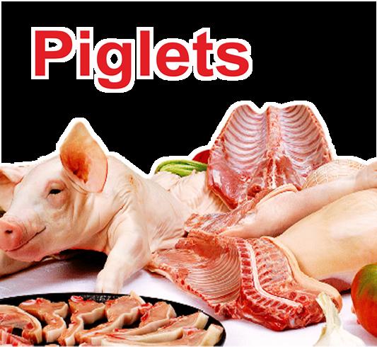 Piglets Cyprus
